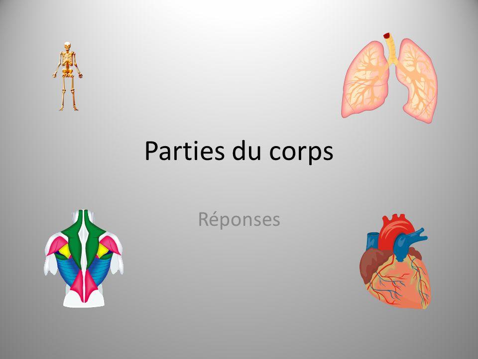 Parties du corps Réponses