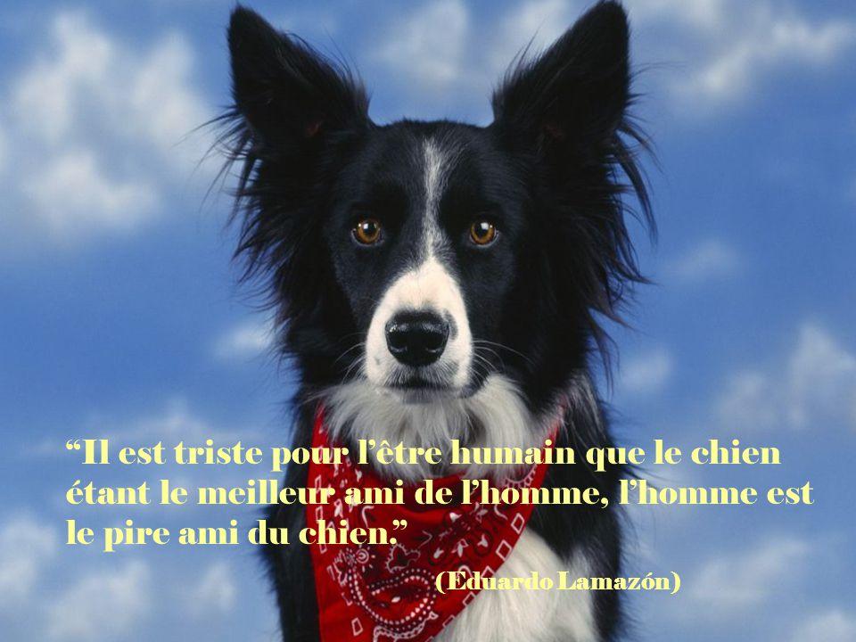 Il est triste pour l'être humain que le chien étant le meilleur ami de l'homme, l'homme est le pire ami du chien.