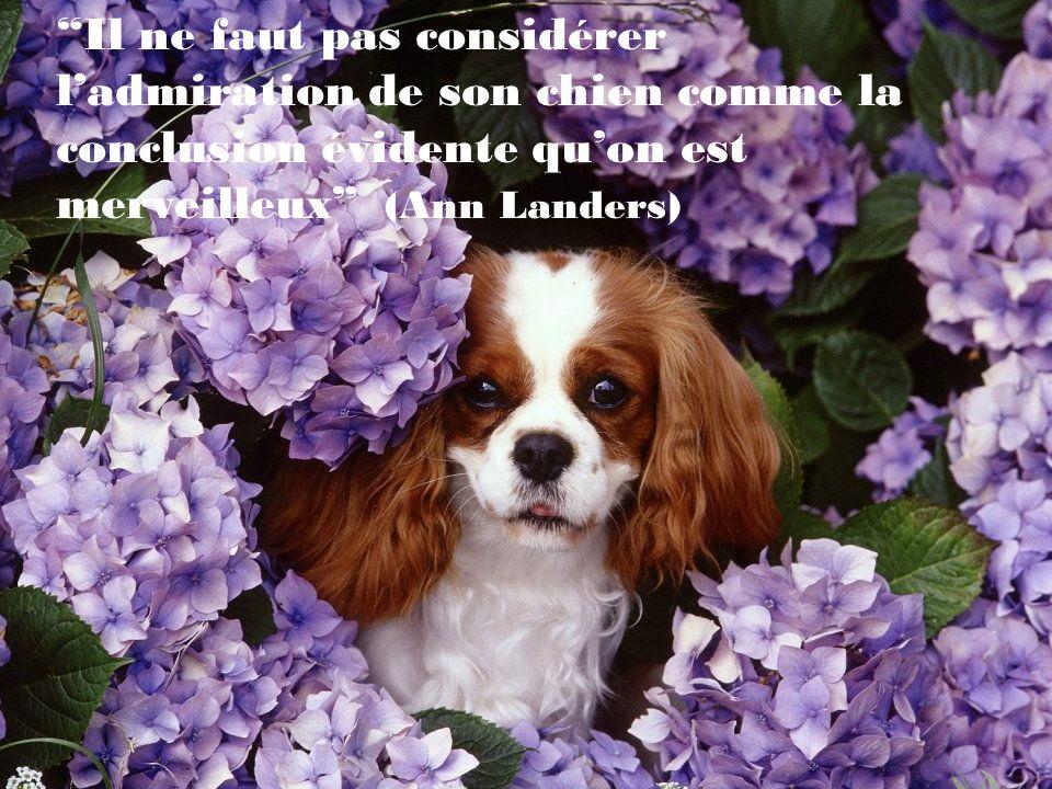 Il ne faut pas considérer l'admiration de son chien comme la conclusion évidente qu'on est merveilleux (Ann Landers)