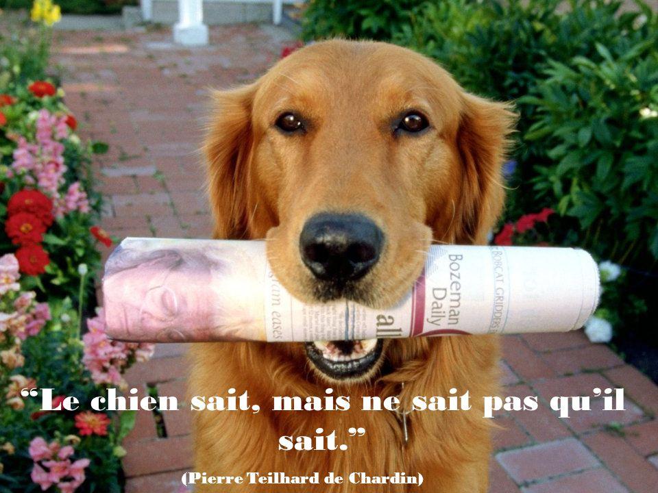 Le chien sait, mais ne sait pas qu'il sait.