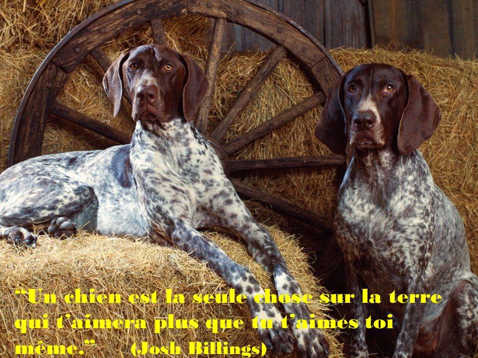 Un chien est la seule chose sur la terre qui t'aimera plus que tu t'aimes toi même. (Josh Billings)