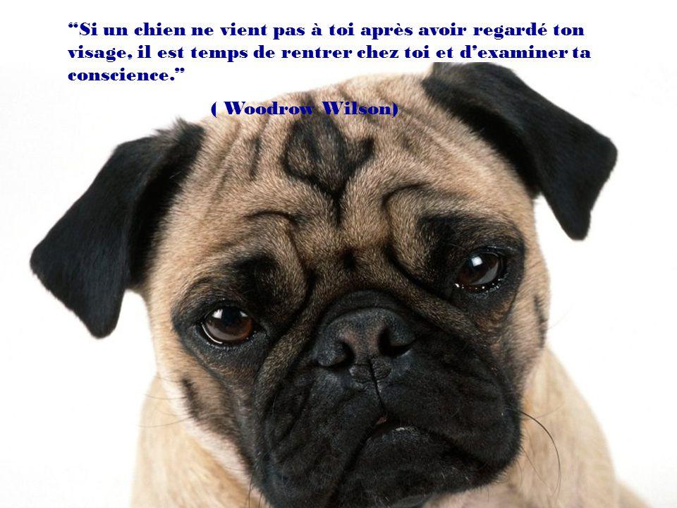 Si un chien ne vient pas à toi après avoir regardé ton visage, il est temps de rentrer chez toi et d'examiner ta conscience.