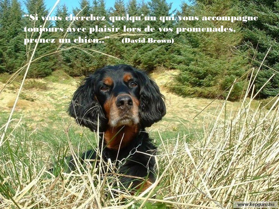 Si vous cherchez quelqu'un qui vous accompagne toujours avec plaisir lors de vos promenades, prenez un chien.. (David Brown)