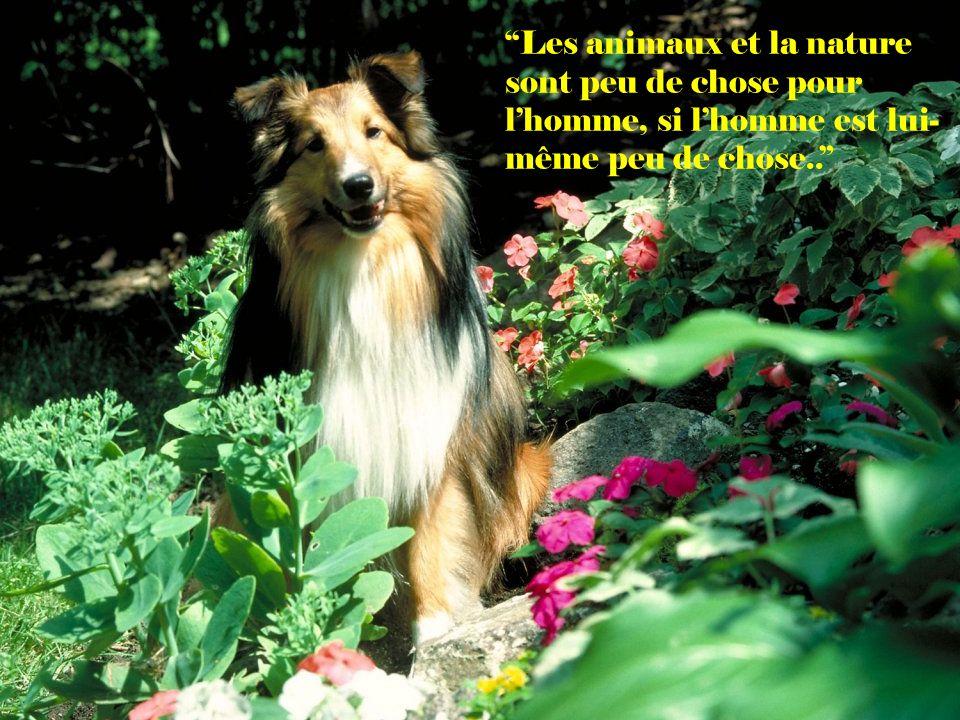 Les animaux et la nature sont peu de chose pour l'homme, si l'homme est lui-même peu de chose..