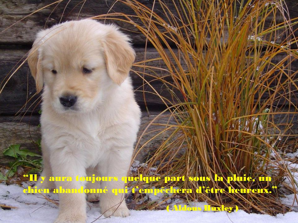 Il y aura toujours quelque part sous la pluie, un chien abandonné qui t'empêchera d'être heureux.