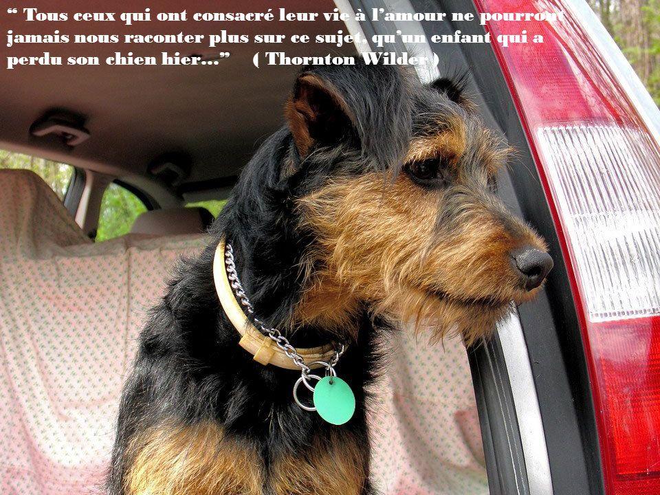 Tous ceux qui ont consacré leur vie à l'amour ne pourront jamais nous raconter plus sur ce sujet, qu'un enfant qui a perdu son chien hier… ( Thornton Wilder )
