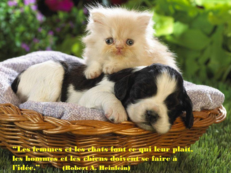 Les femmes et les chats font ce qui leur plaît, les hommes et les chiens doivent se faire à l'idée. (Robert A.