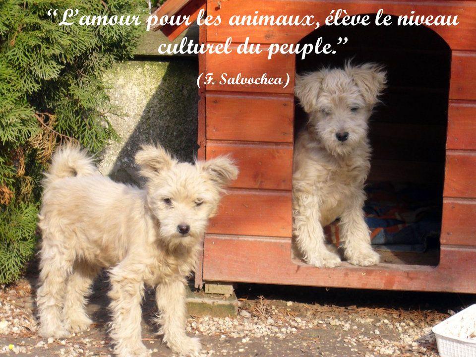 L'amour pour les animaux, élève le niveau culturel du peuple.