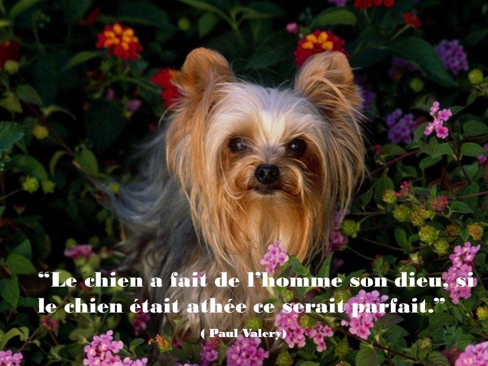 Le chien a fait de l'homme son dieu, si le chien était athée ce serait parfait.
