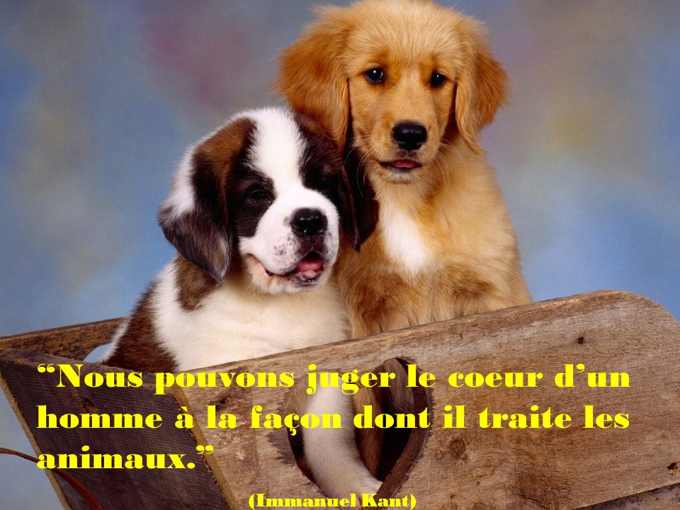 Nous pouvons juger le coeur d'un homme à la façon dont il traite les animaux.