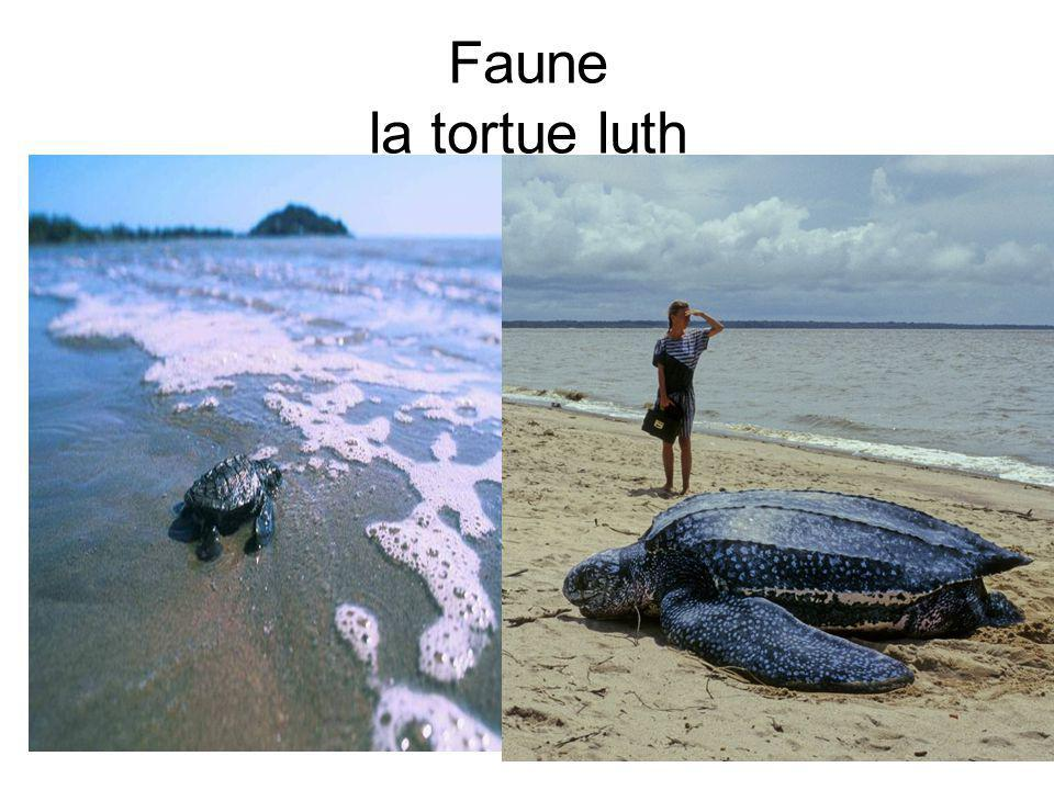 Faune la tortue luth