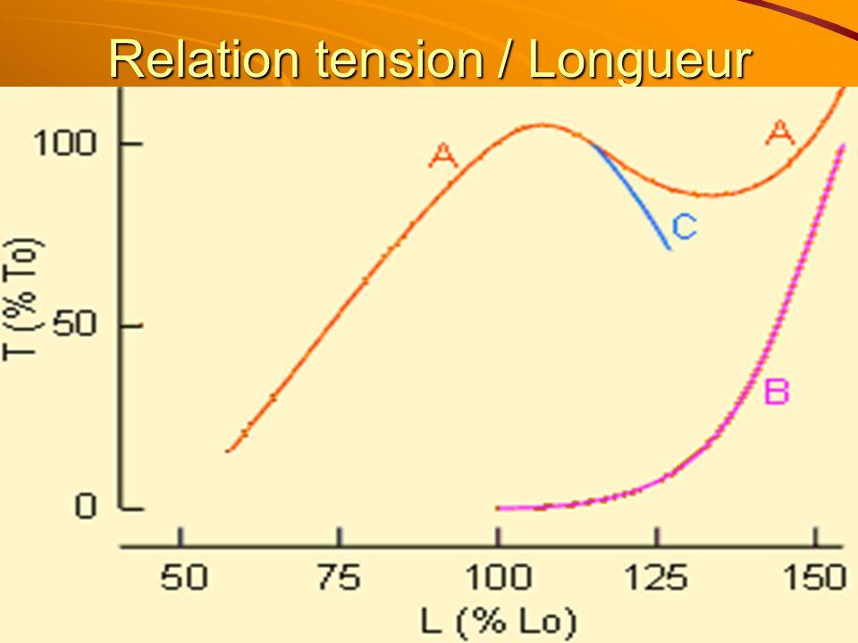 Relation tension / Longueur