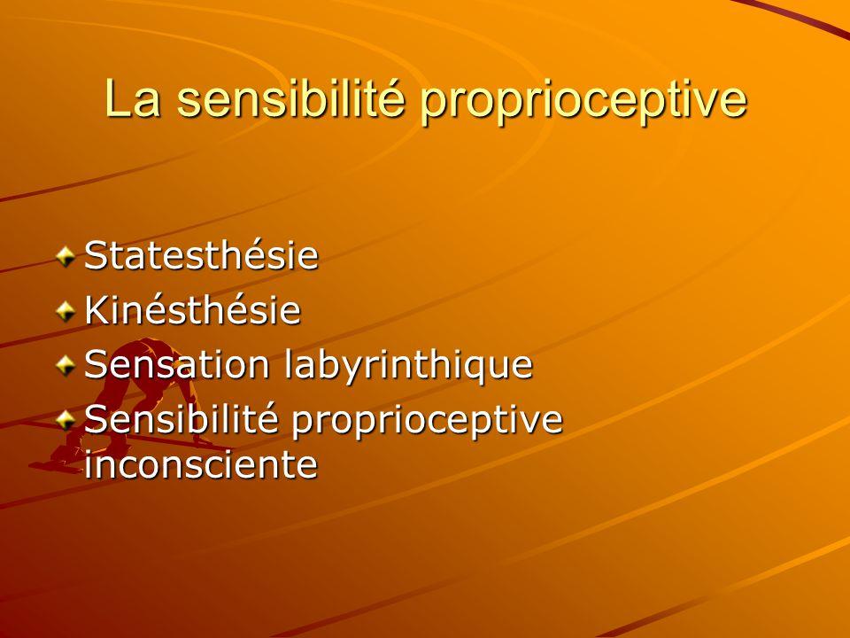 La sensibilité proprioceptive