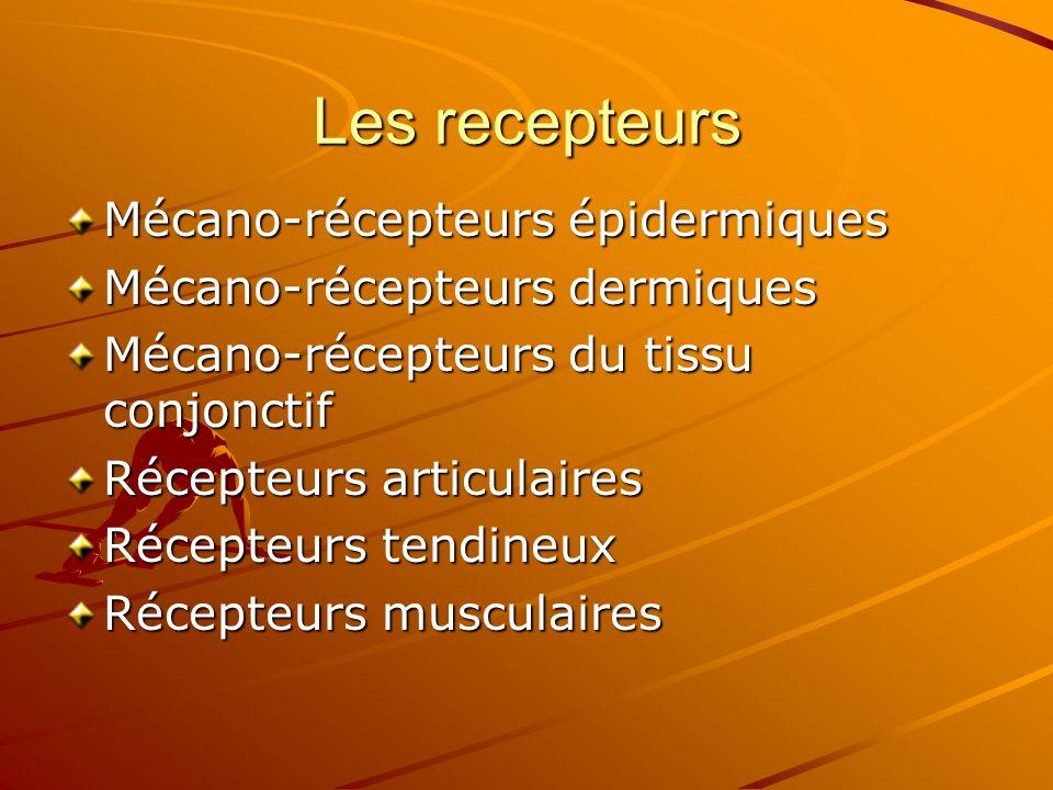 Les recepteurs Mécano-récepteurs épidermiques
