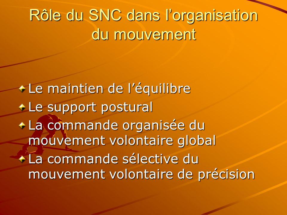 Rôle du SNC dans l'organisation du mouvement