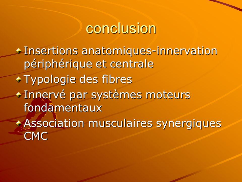 conclusion Insertions anatomiques-innervation périphérique et centrale