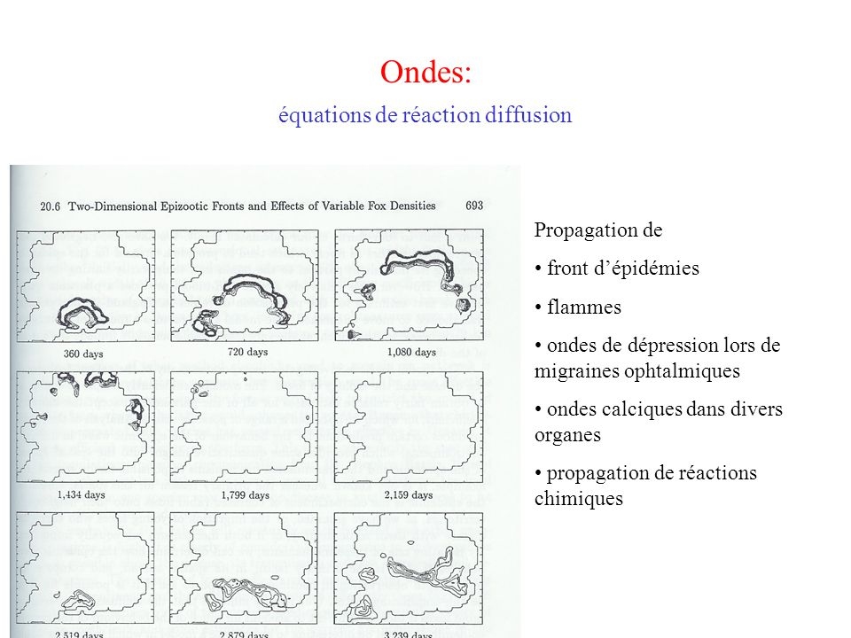 Ondes: équations de réaction diffusion