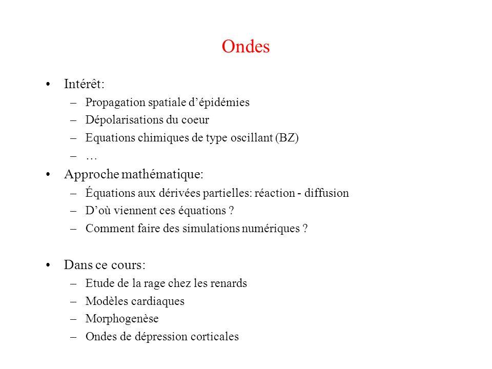 Ondes Intérêt: Approche mathématique: Dans ce cours: