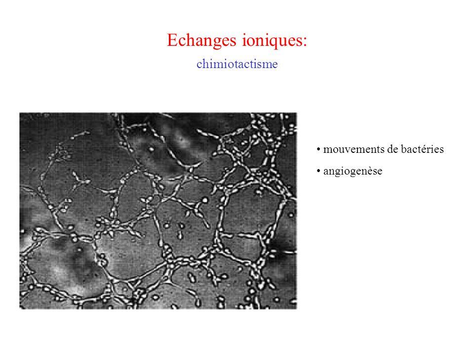 Echanges ioniques: chimiotactisme