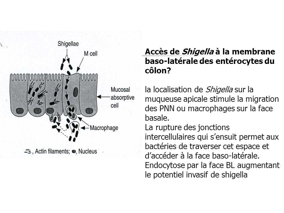 Accès de Shigella à la membrane