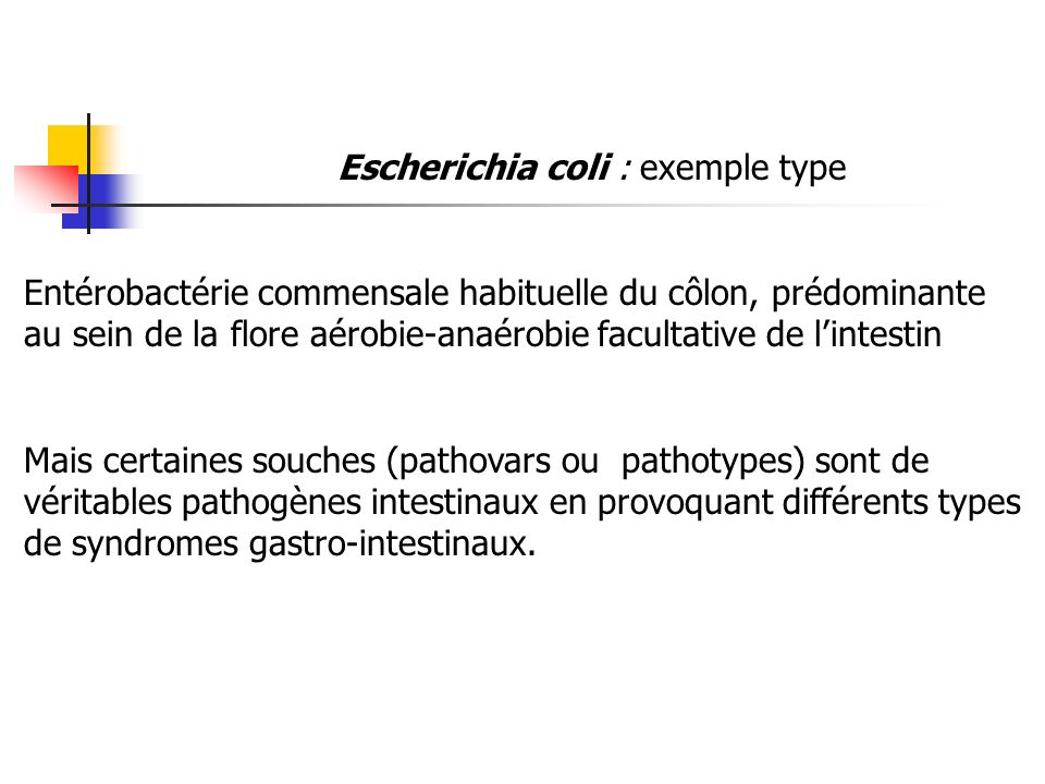 Escherichia coli : exemple type