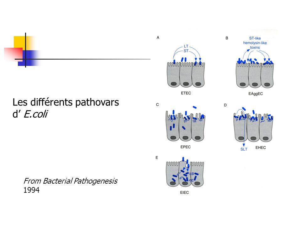 Les différents pathovars d' E.coli