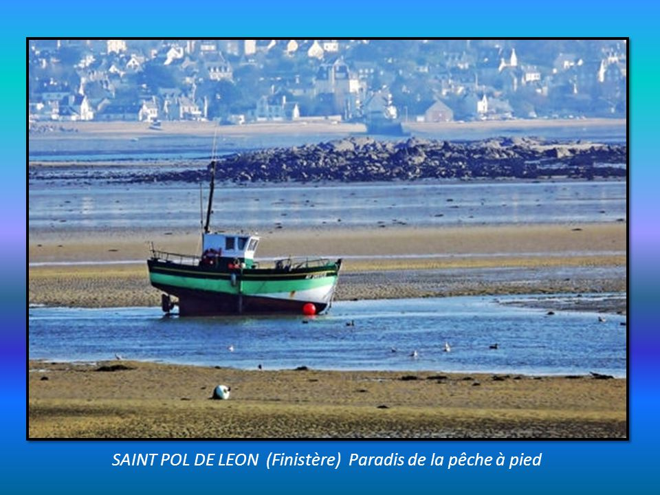 SAINT POL DE LEON (Finistère) Paradis de la pêche à pied