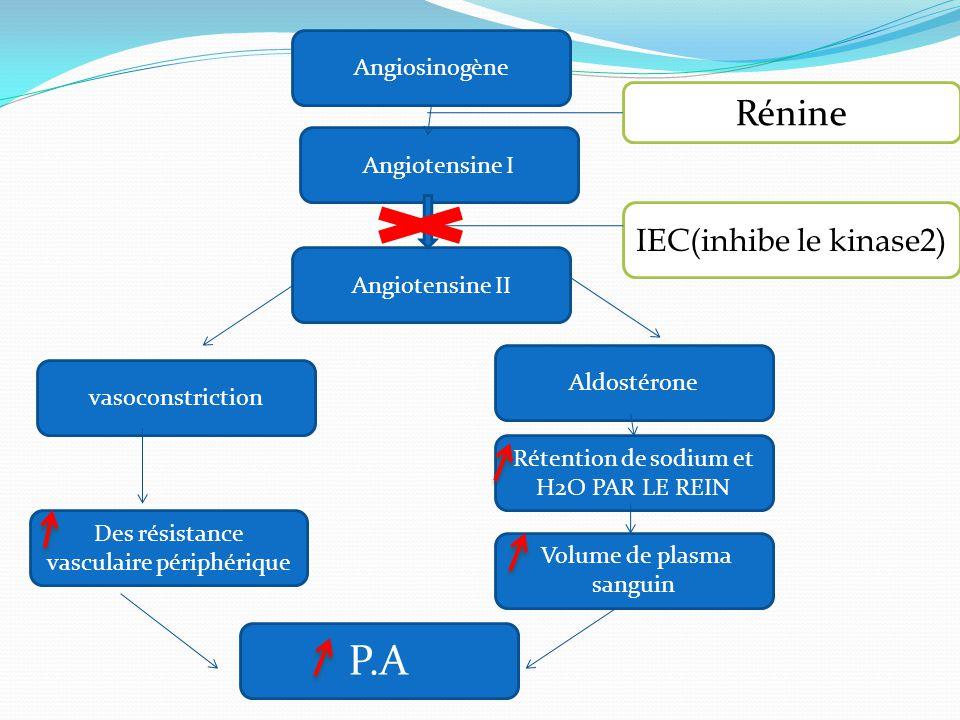 P.A Rénine IEC(inhibe le kinase2) Angiosinogène Angiotensine I