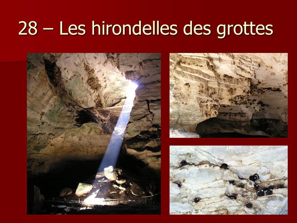 28 – Les hirondelles des grottes