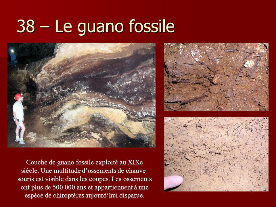 38 – Le guano fossile