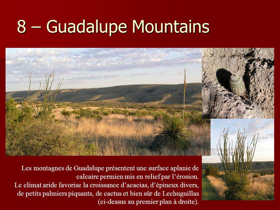 8 – Guadalupe Mountains Les montagnes de Guadalupe présentent une surface aplanie de calcaire permien mis en relief par l'érosion.