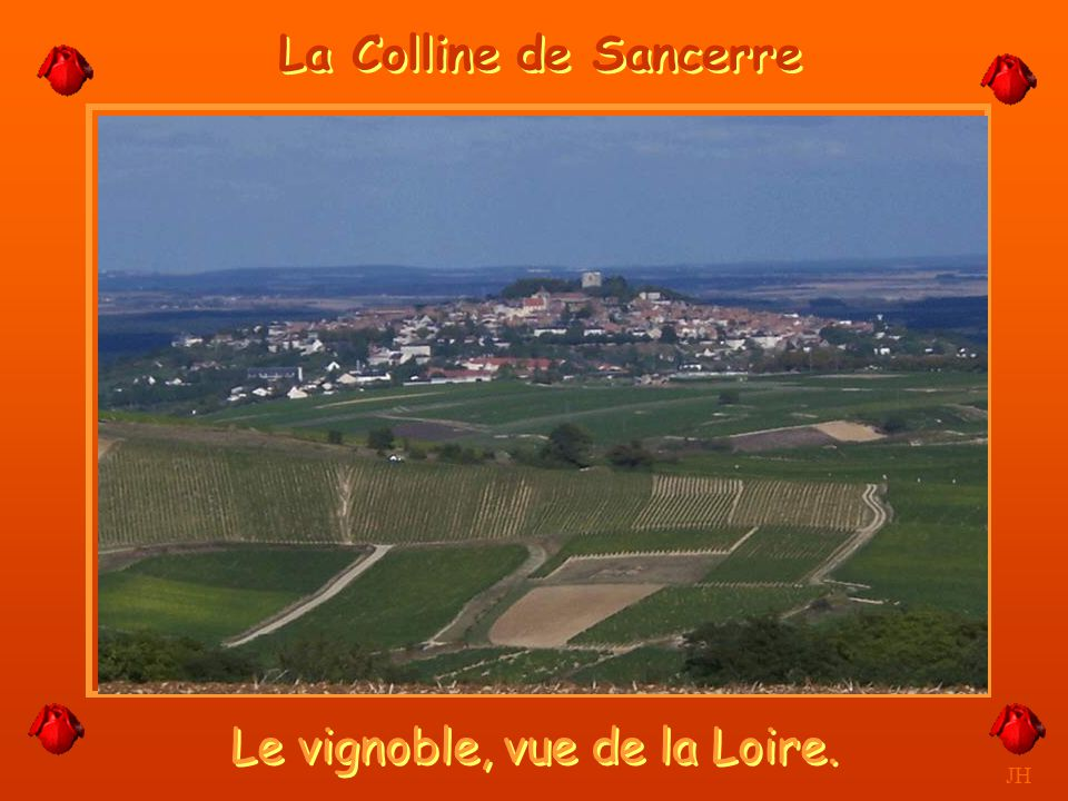 Le vignoble, vue de la Loire.