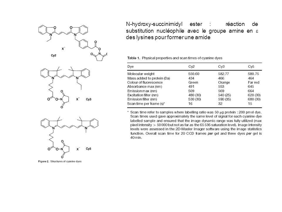 N-hydroxy-succinimidyl ester : réaction de substitution nucléophile avec le groupe amine en e des lysines pour former une amide