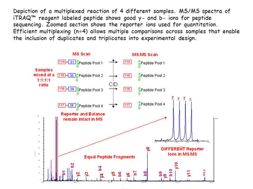 Depiction of a multiplexed reaction of 4 different samples