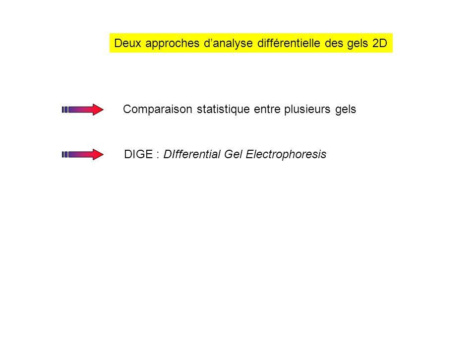 Deux approches d'analyse différentielle des gels 2D
