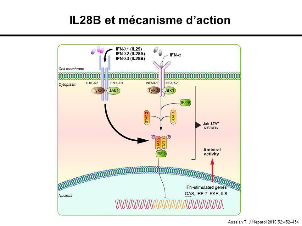 IL28B et mécanisme d'action