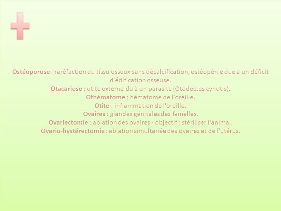 Ostéoporose : raréfaction du tissu osseux sans décalcification, ostéopénie due à un déficit d édification osseuse. Otacariose : otite externe du à un parasite (Otodectes cynotis). Othématome : hématome de l oreille. Otite : inflammation de l oreille. Ovaires : glandes génitales des femelles. Ovariectomie : ablation des ovaires - objectif : stériliser l animal. Ovario-hystérectomie : ablation simultanée des ovaires et de l utérus.