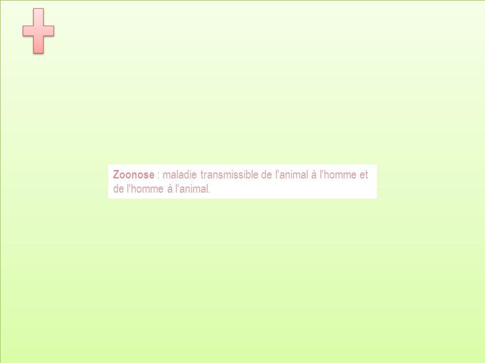 Zoonose : maladie transmissible de l animal à l homme et de l homme à l animal.