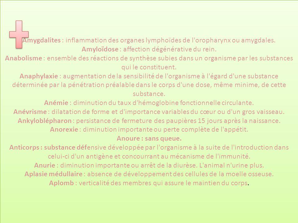 Amygdalites : inflammation des organes lymphoïdes de l oropharynx ou amygdales.