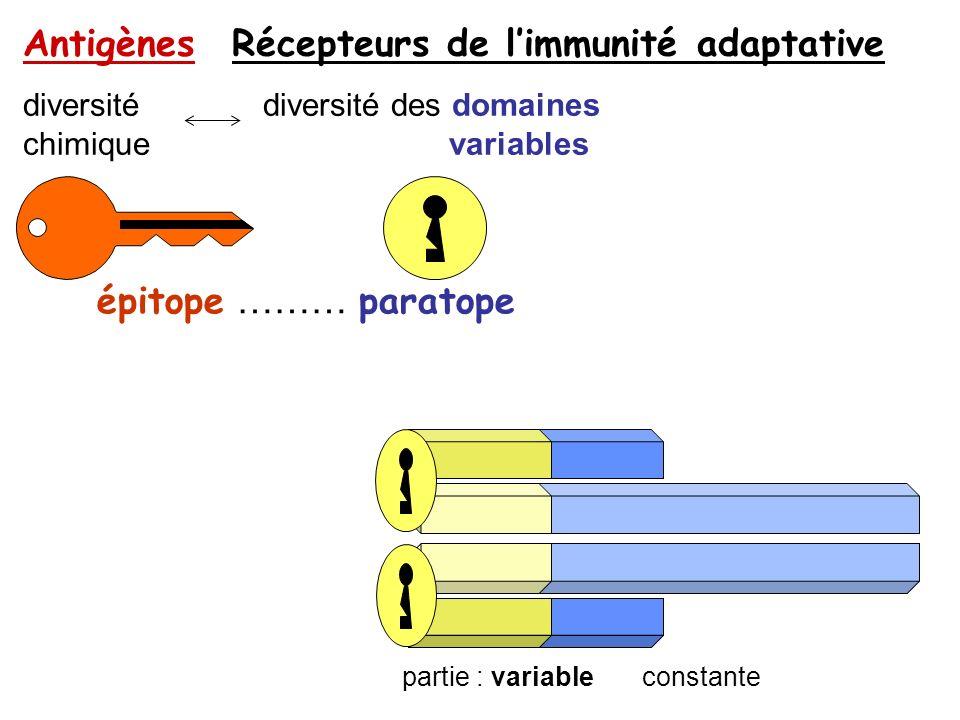 Antigènes Récepteurs de l'immunité adaptative