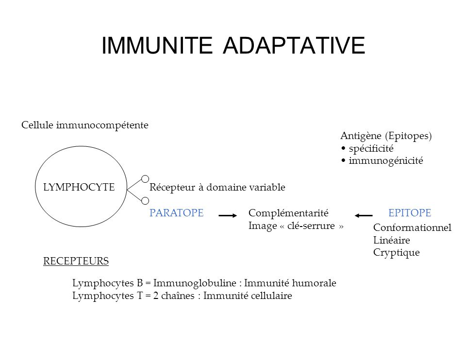 IMMUNITE ADAPTATIVE Cellule immunocompétente Antigène (Epitopes)