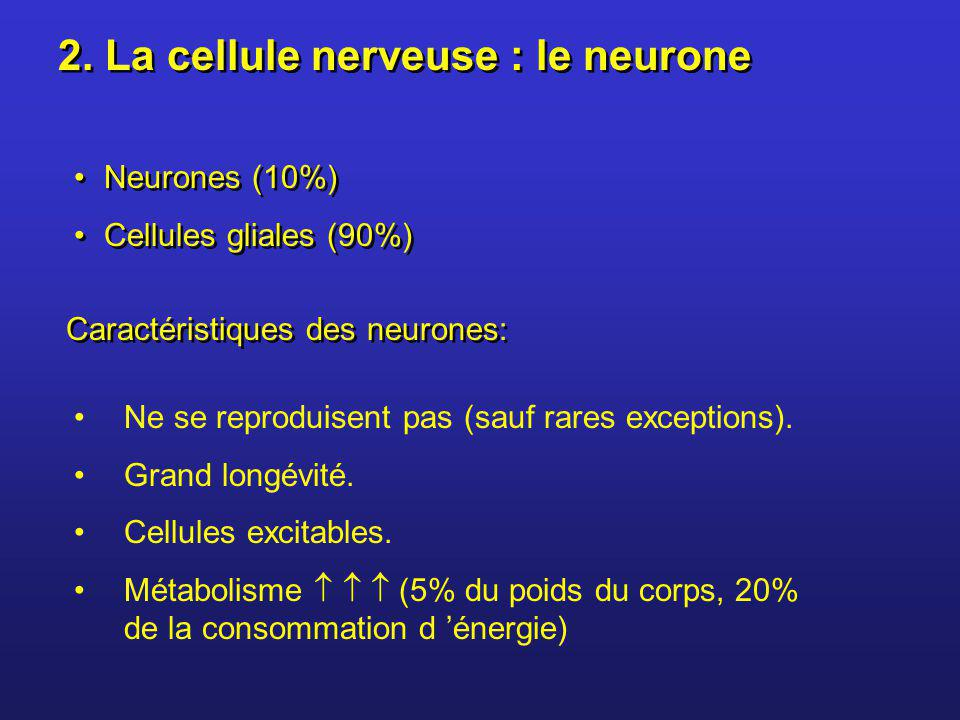2. La cellule nerveuse : le neurone