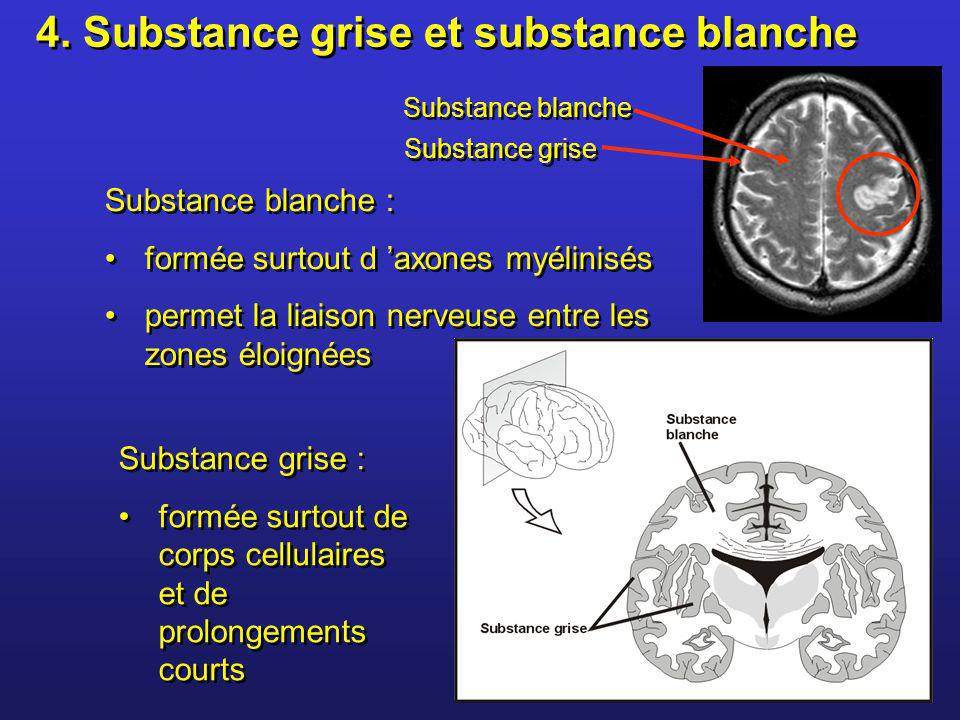 4. Substance grise et substance blanche