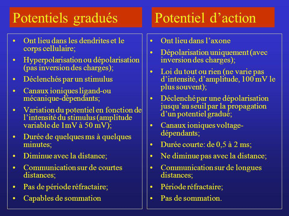 Potentiels gradués Potentiel d'action