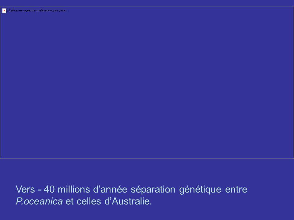 Vers - 40 millions d'année séparation génétique entre P