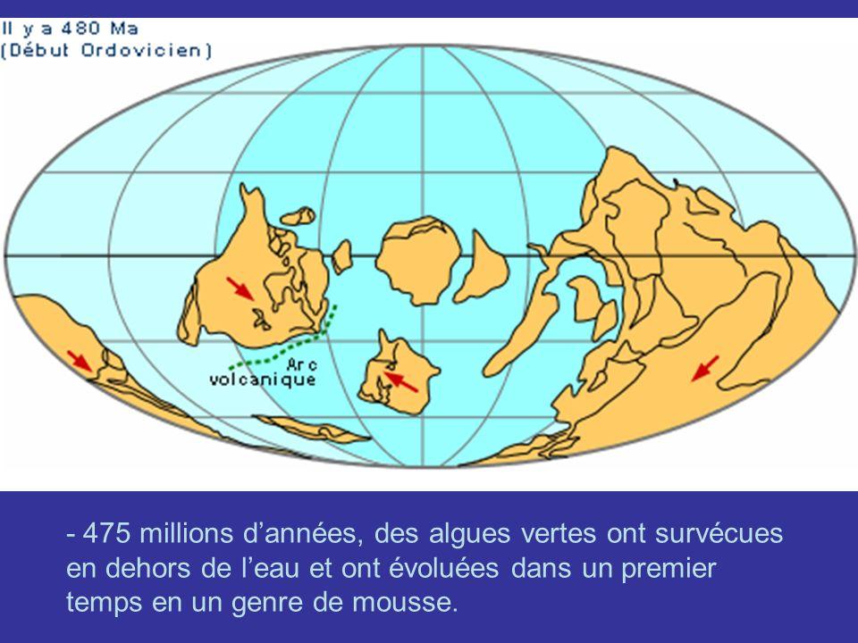 - 475 millions d'années, des algues vertes ont survécues en dehors de l'eau et ont évoluées dans un premier temps en un genre de mousse.