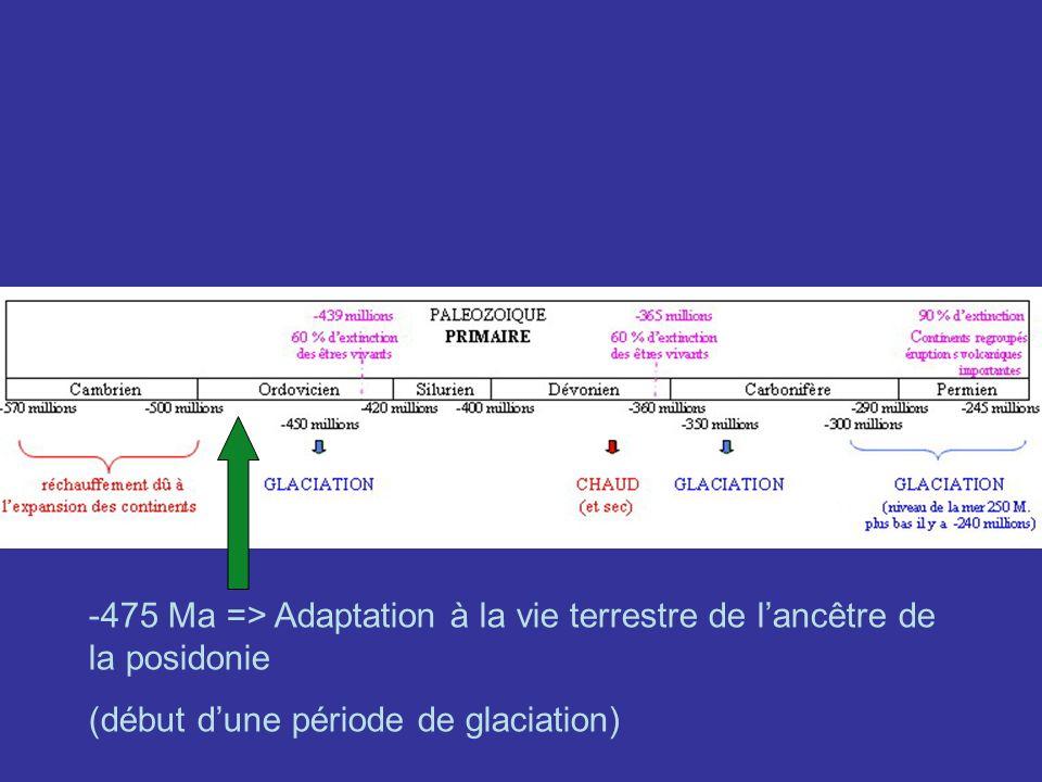 475 Ma => Adaptation à la vie terrestre de l'ancêtre de la posidonie