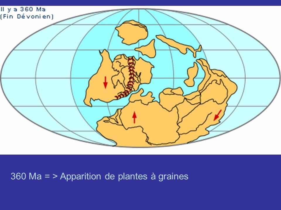 360 Ma = > Apparition de plantes à graines