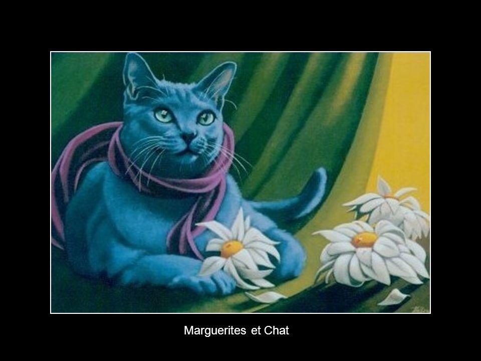 Marguerites et Chat