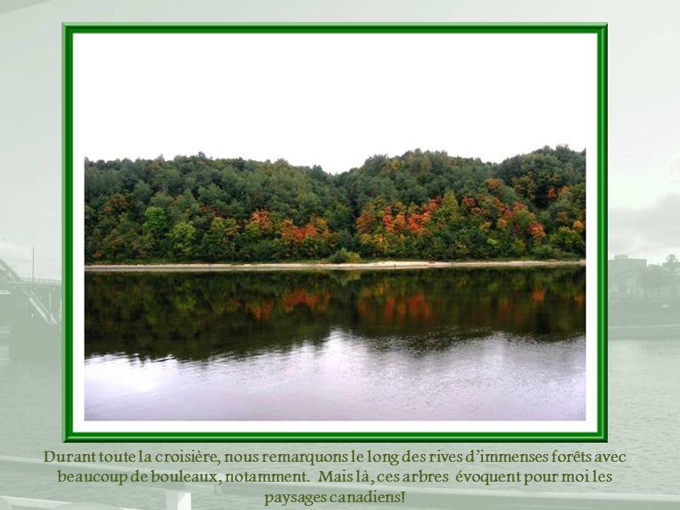 Durant toute la croisière, nous remarquons le long des rives d'immenses forêts avec beaucoup de bouleaux, notamment.